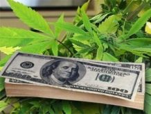 bill-gives-states-marijuana-tax-power-thcf