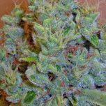 weedcrystal