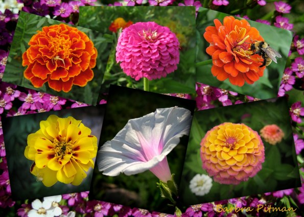 Flower Postcard collage