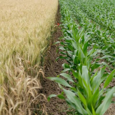 Devon Farmer Sows Historically Important Fields, Reaps £31,500 Bill