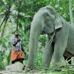 Oldest known elephant in captivity dies at 88 in India