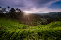 AMPHITHEATER OF CARROTS - A horseshoe-shaped terrace of carrot farms forms this beautiful landscape in Barangay Suyoc, Mankayan town, in Benguet during sunrise. Benguet grows most of the salad vegetables that reach Metro Manila markets.