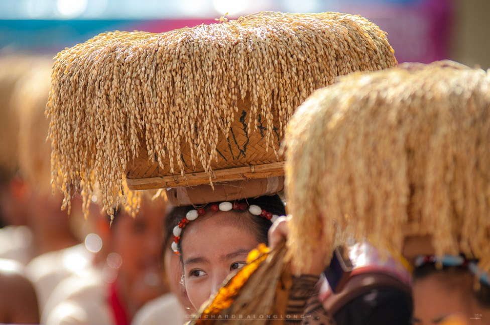 Groups of women in their full traditional attire dances along with their baskets filled with sun-dried harvest of rice during a festival in Bontoc, Mountain Province.