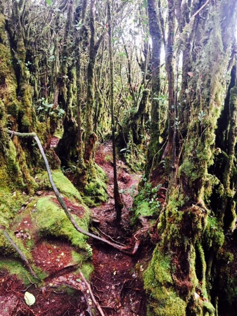The Mossy Forest in Malaysia