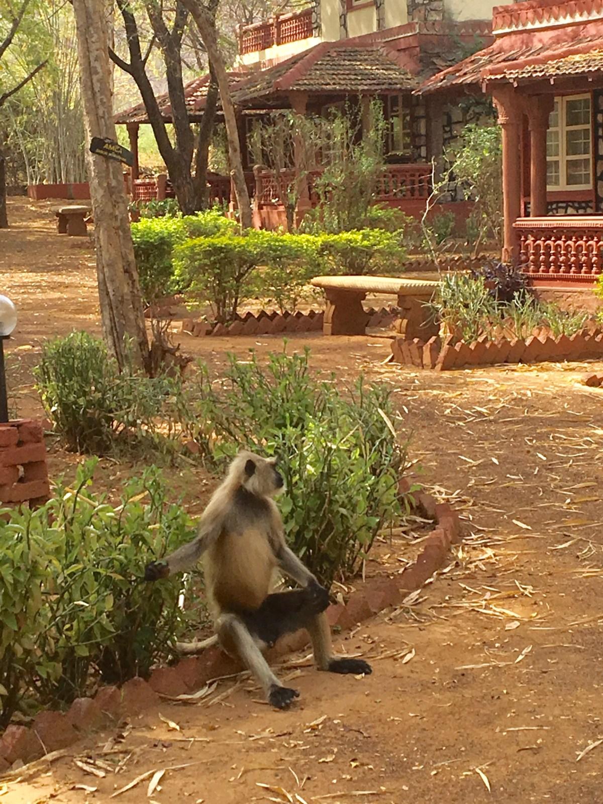 Our resort at Rathambore