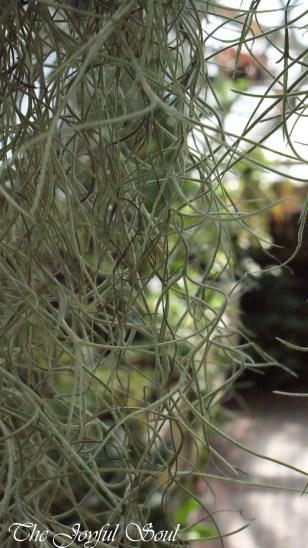 Botanical Gardens - Part 1/3 - Image 2/18