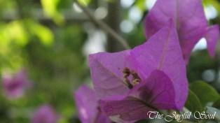 Botanical Gardens - Part 1/3 - Image 10/18
