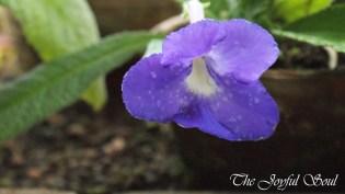 Botanical Gardens - Part 1/3 - Image 14/18