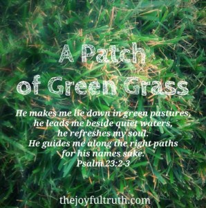 A Patch of Green Grass