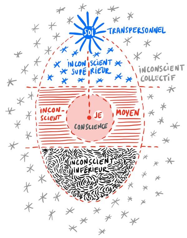 Diagramme de l'œuf