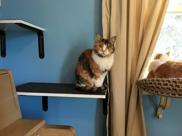 Kilala on a shelf with Buster in the window seat