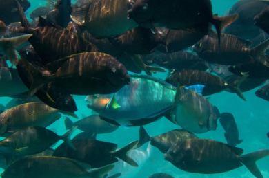 Cultured Fish. Photo credit to Alex Salceanu.