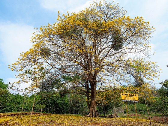 Lots of land for sale in Costa Rica