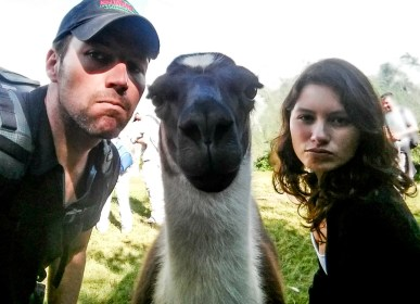 Shameless Llama Selfie
