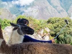 PERU-150530-10507