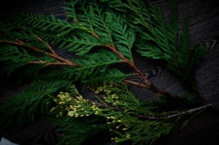 pine-600x399