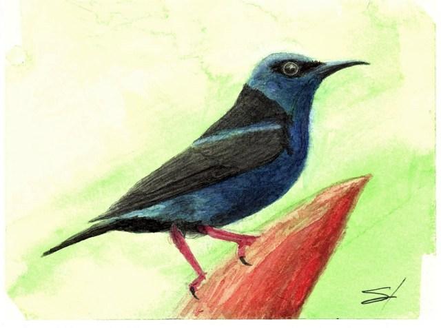 Crumpled bird sunbird in watercolor