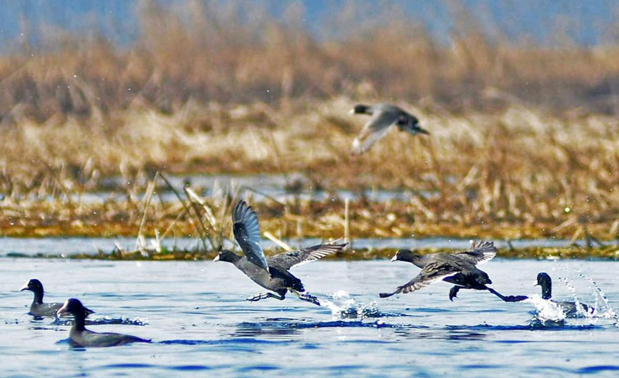 Climate Change, Urban Development-Kashmir's Wetlands