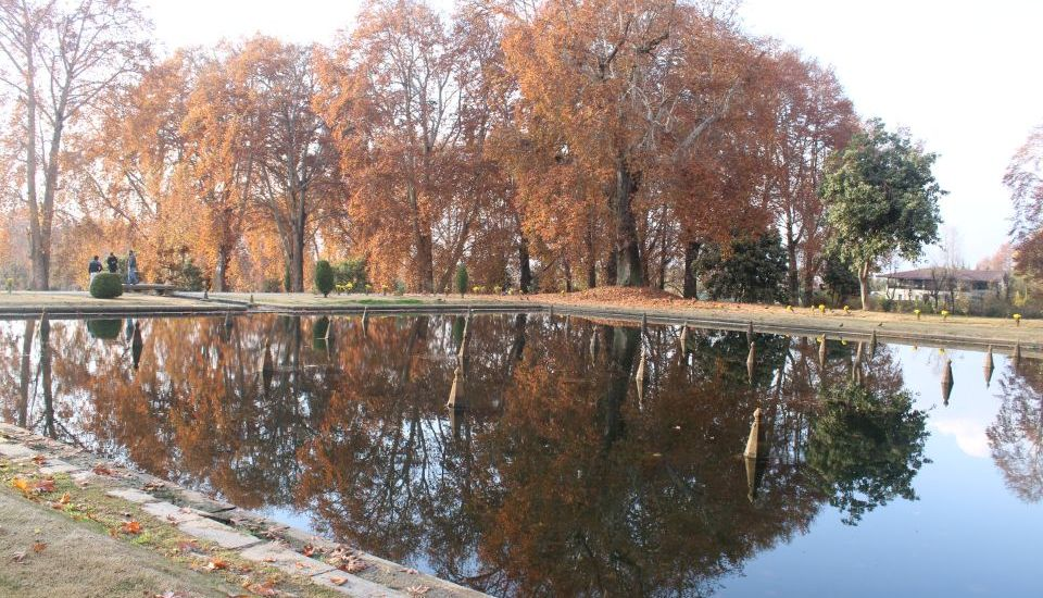 The mighty chinars in Nishat garden seem looking at their…