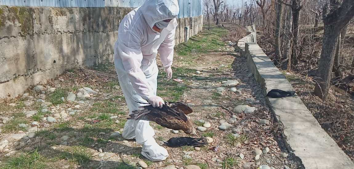 Scare in Tangmarg village as birds found dead in vicinity