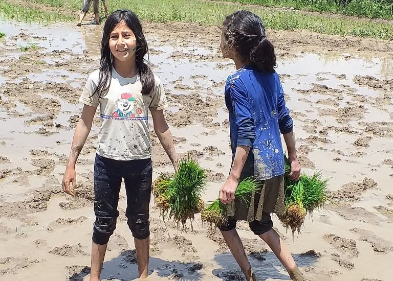 Young farmers: As the season of rice cultivation, the staple food in Kashmir…