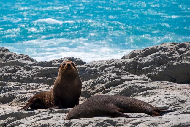 Phillip Island Nature Park Australia