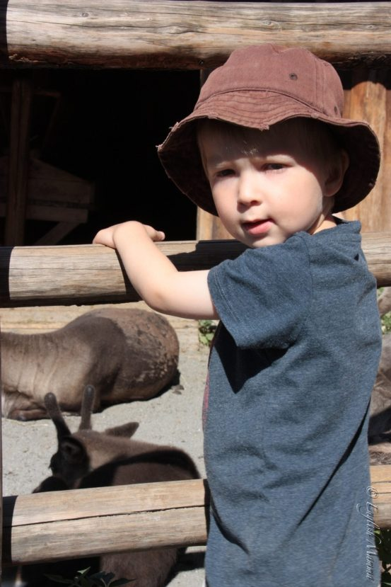 An English Mamma in Stockholm: toddler with reindeer at Skansen