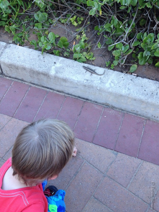 An English Mamma in Stockholm: toddler gecko south africa