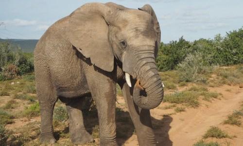 The Kat Edit: safari with children elephant addo featured