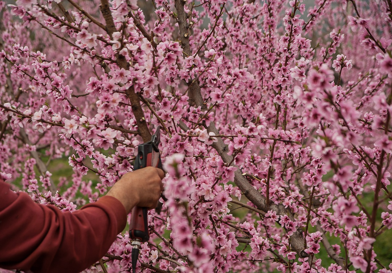 Why You Need to Prune Your Fruit Trees