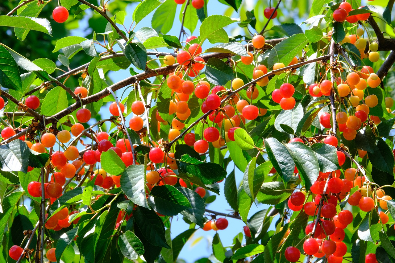 What You Need to Know about Fruit Tree Pollenizers