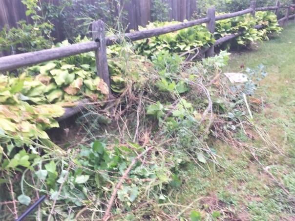 garden mess