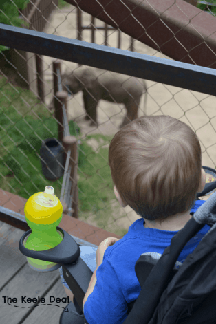 Watching the Elephants at the National Zoo in Washington DC