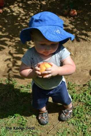 Alstede Farms in Chester, New Jersey hosts a peach festival each year. We went to the peach festival for our second year this past weekend. The festival is a great family activity with plenty of yummy treats and fun family activities.