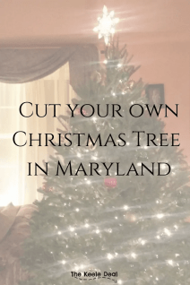 Cut Your Own Christmas tree at these tree farms in Maryland. #Christmas #Christmastree #Treefarm #maryland #marylandtreefarm #Cutyourowntree #Christmas