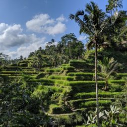 Notes from Bali