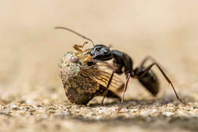 Just like camponotus japonicus ant feeding on ground, the micro-organisms are the kind of workers that this ant represents. Hard working and effective to do it's job.