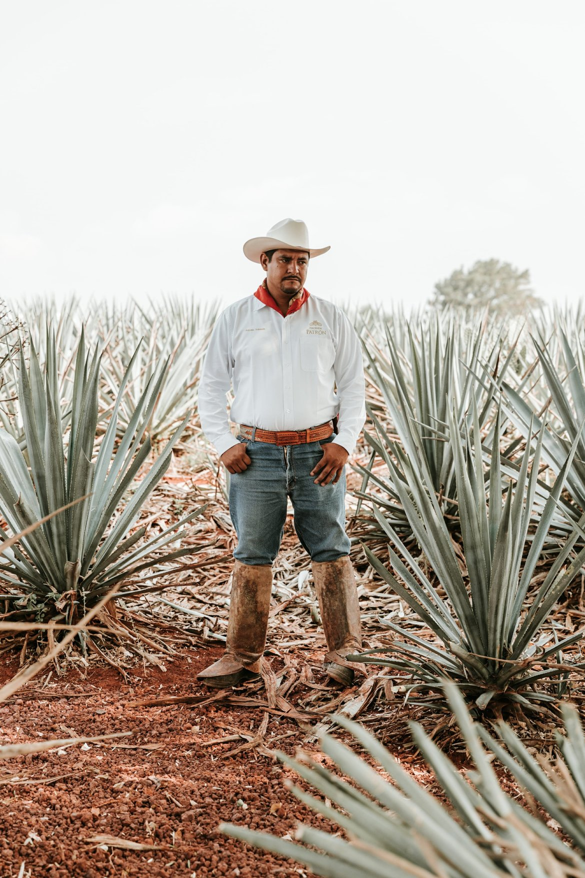 jimador in agave field