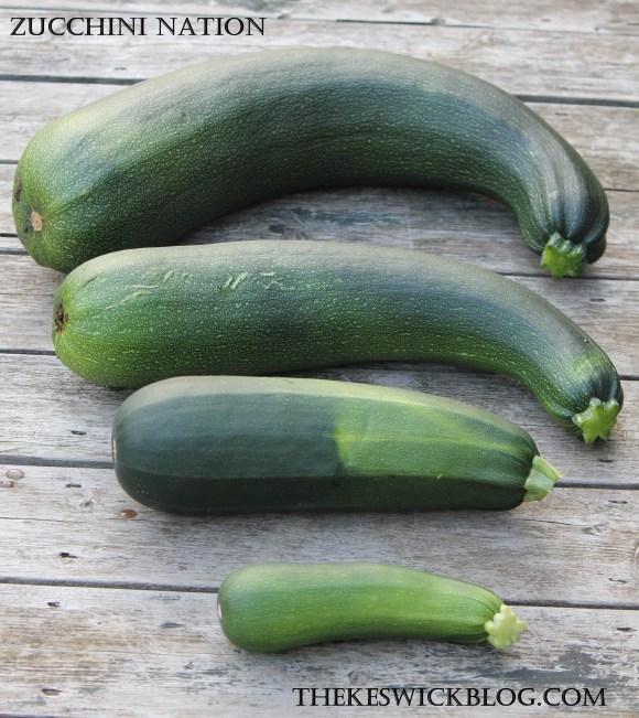 zucchini nation