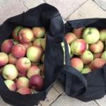 Fresh Ontario Empire apples. So good!