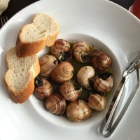 The Little Snail
