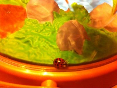 ladybughouse
