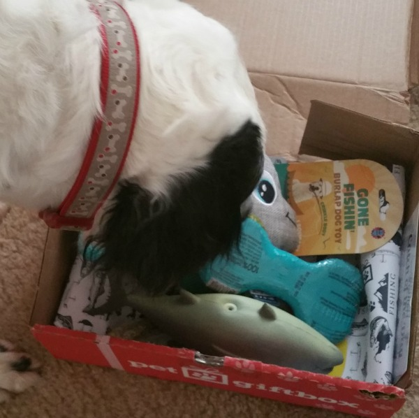 petsubscriptionboxes