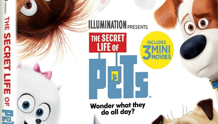 What Do Pets Do All Day? Order Secret Life Of Pets On Blu-Ray/DVD To Find Out!
