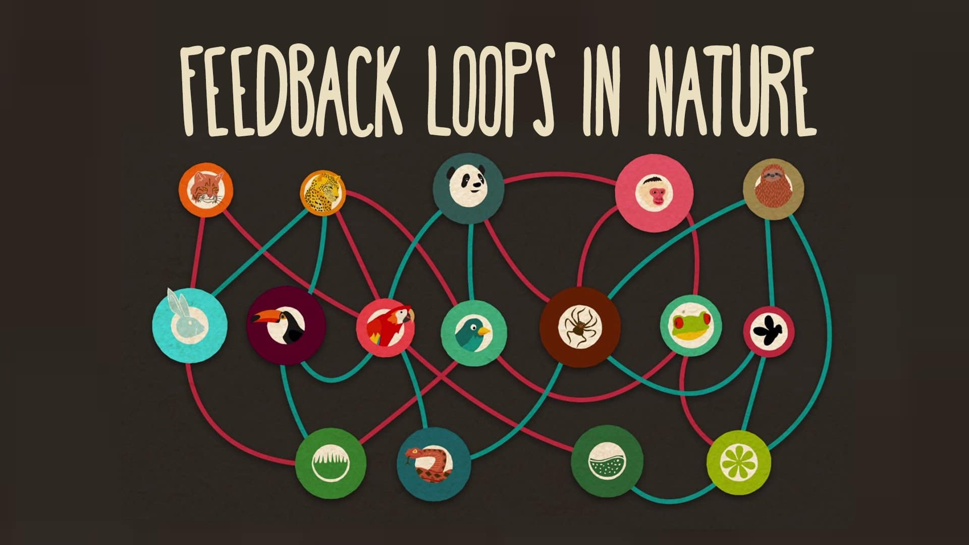 Feedback Loops How Nature Gets Its Rhythms