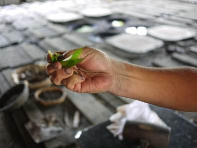 Tadashi Higeta with an indigo plant
