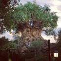 Disney's Animal Kingdom | Tree of Life | Walt Disney World