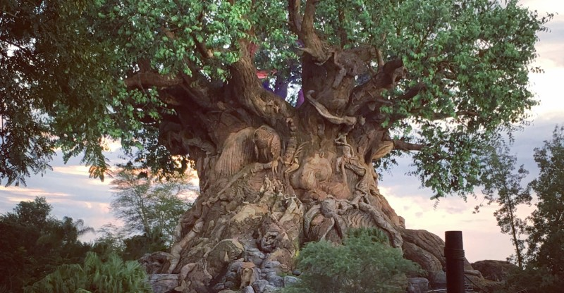 Disney's Animal Kingdom | Tree of Life | Walt Disney World