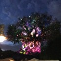 Tree of Life Awakenings in Disney Animal Kingdom Walt Disney World