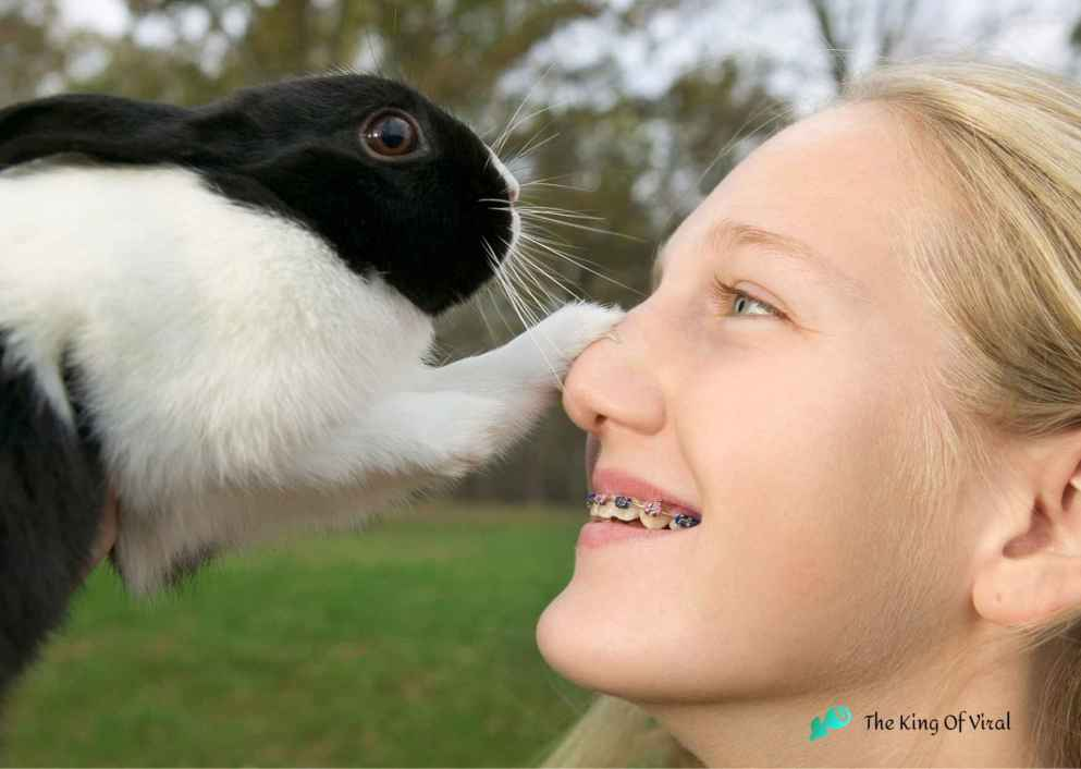 Rabbit best Pets lover